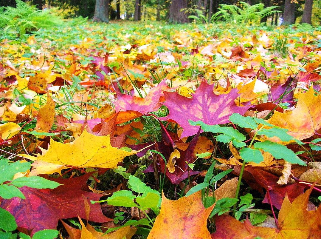 внешность хорошую картинки листья опадают листья это специальная