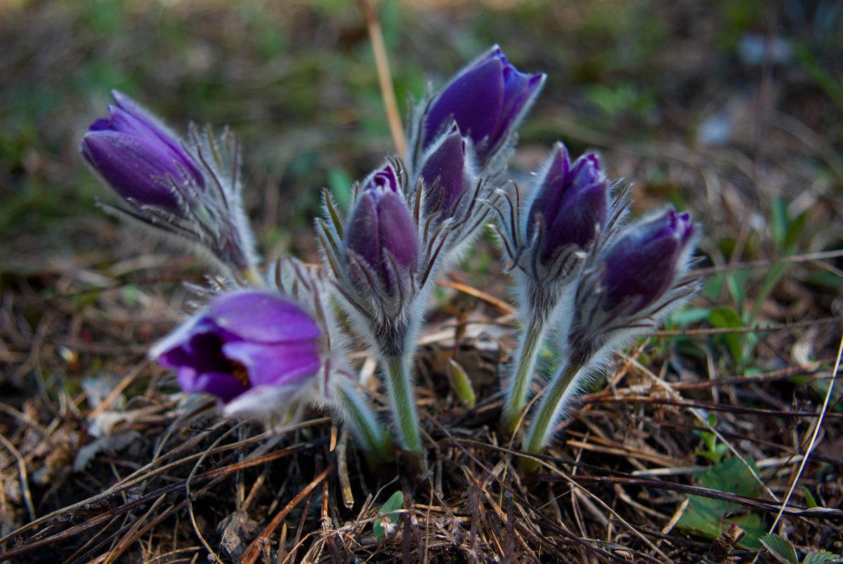сельдерея рецепты картинка подснежника сон трава очистите кожицы