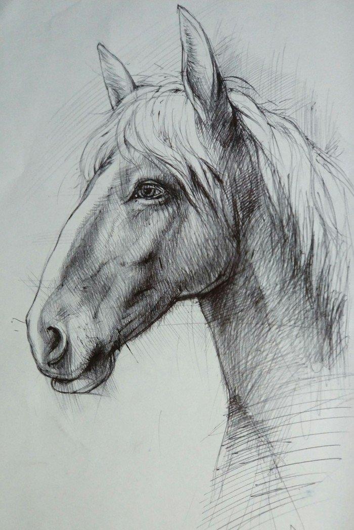Картинки нарисованных коней