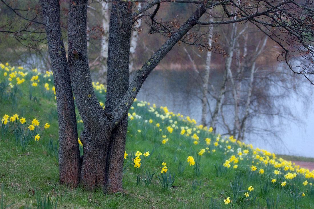 Картинки весенний природы