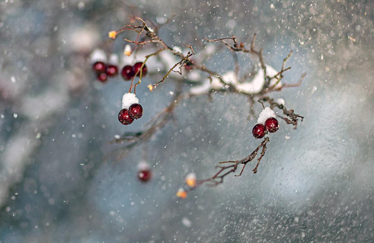 Картинки вишня в снегу открытки новогодние