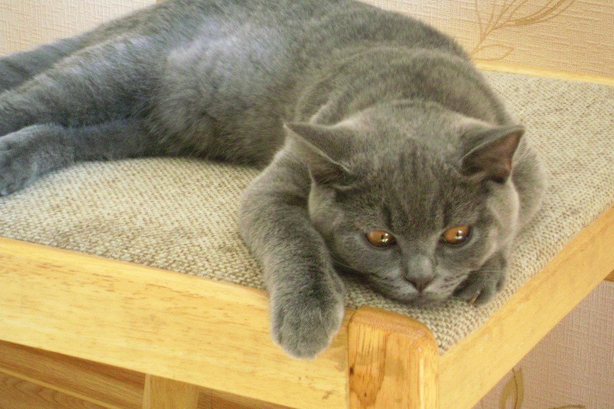 Картинка обиженный кот