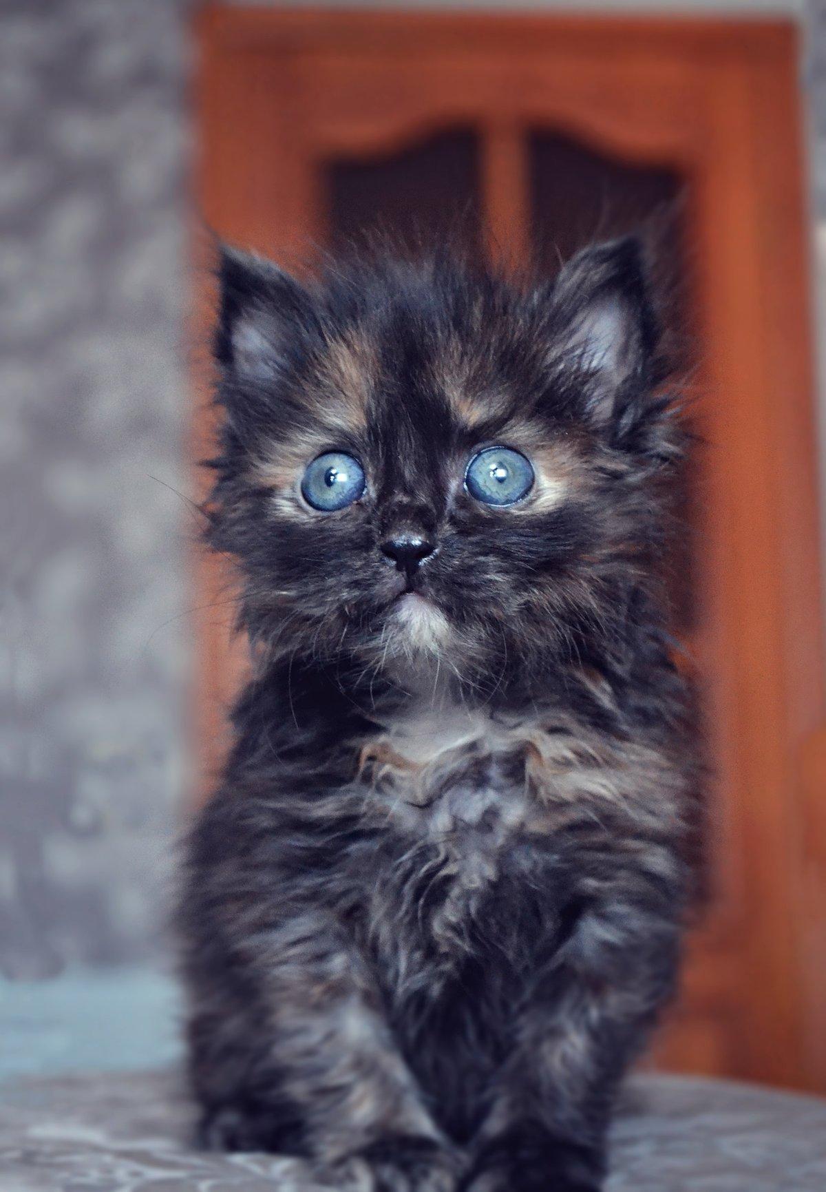 живые картинки про котенка имеет более толстую
