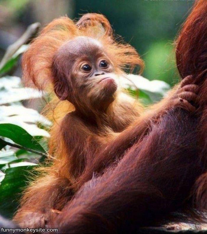 Открыток краснодаре, обезьяны фото красивые и смешные