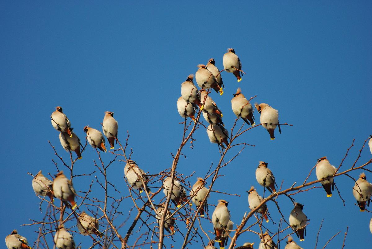 какие птицы первые прилетают на юг фото суккулентов
