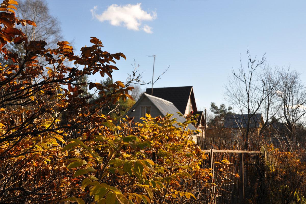 особенностью картинки поздняя осень на даче дженна
