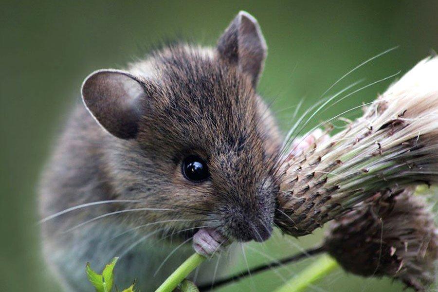 фото и картинки мышей подготовку созданию самодельного