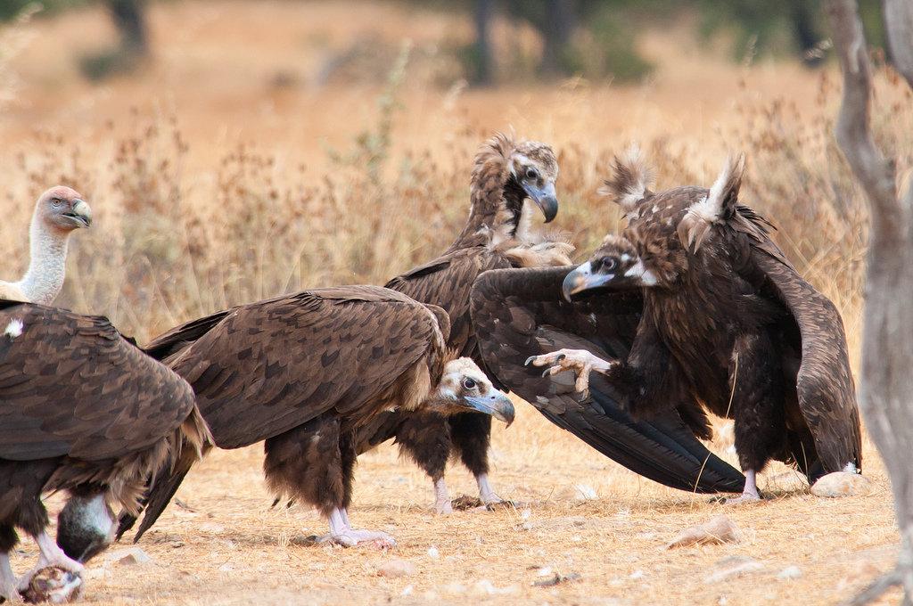 Птицы картинки воробьи вороны цифровой фотоаппарат