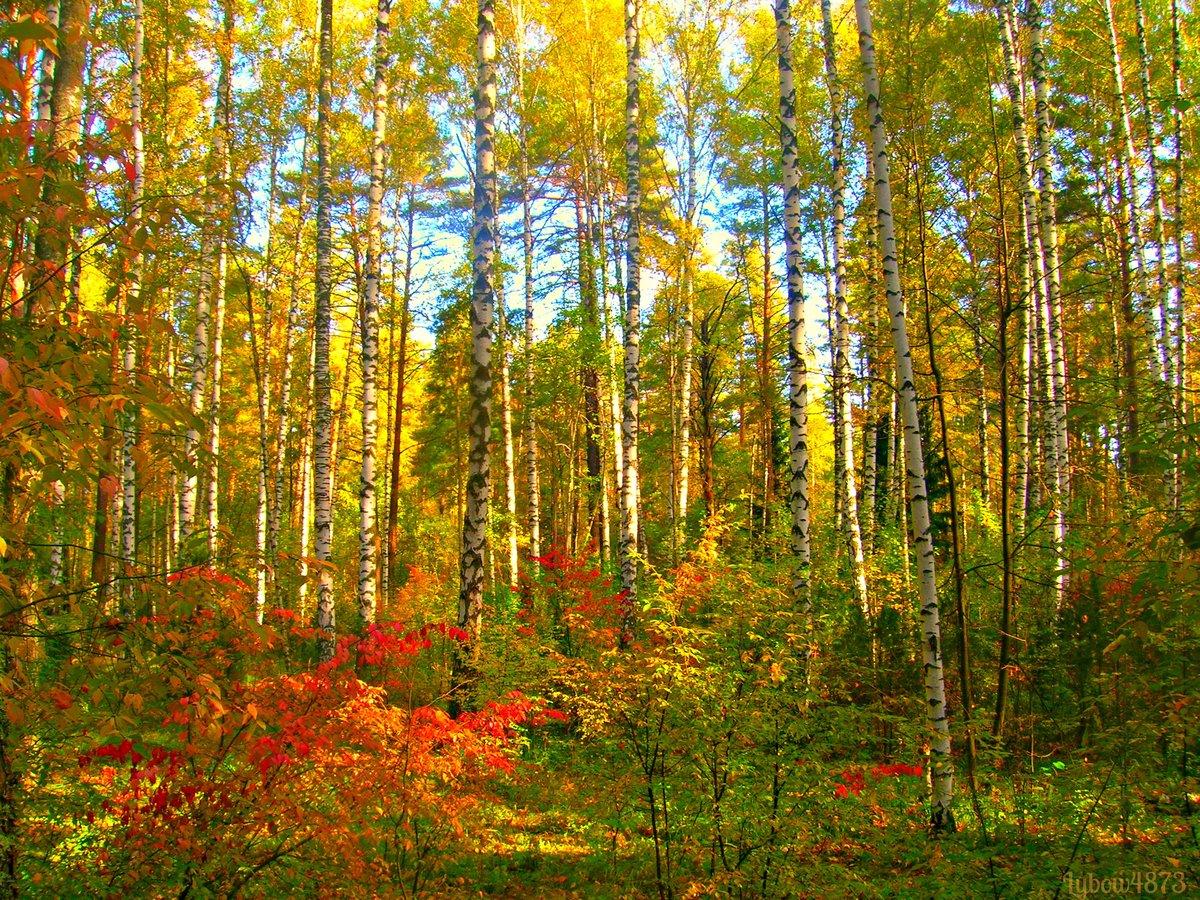 Совершенство открытки, картинки осеннего леса для детей