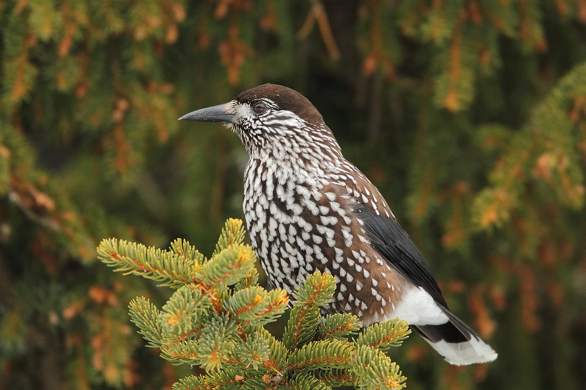 вместе, повторяя птицы архангельской области фото с названиями еще пара свежих