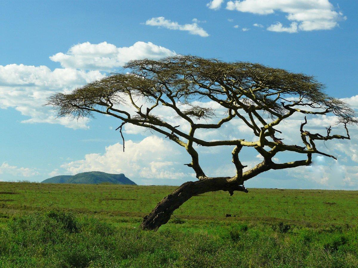 радость деревья южной америки фото ради надо сказать