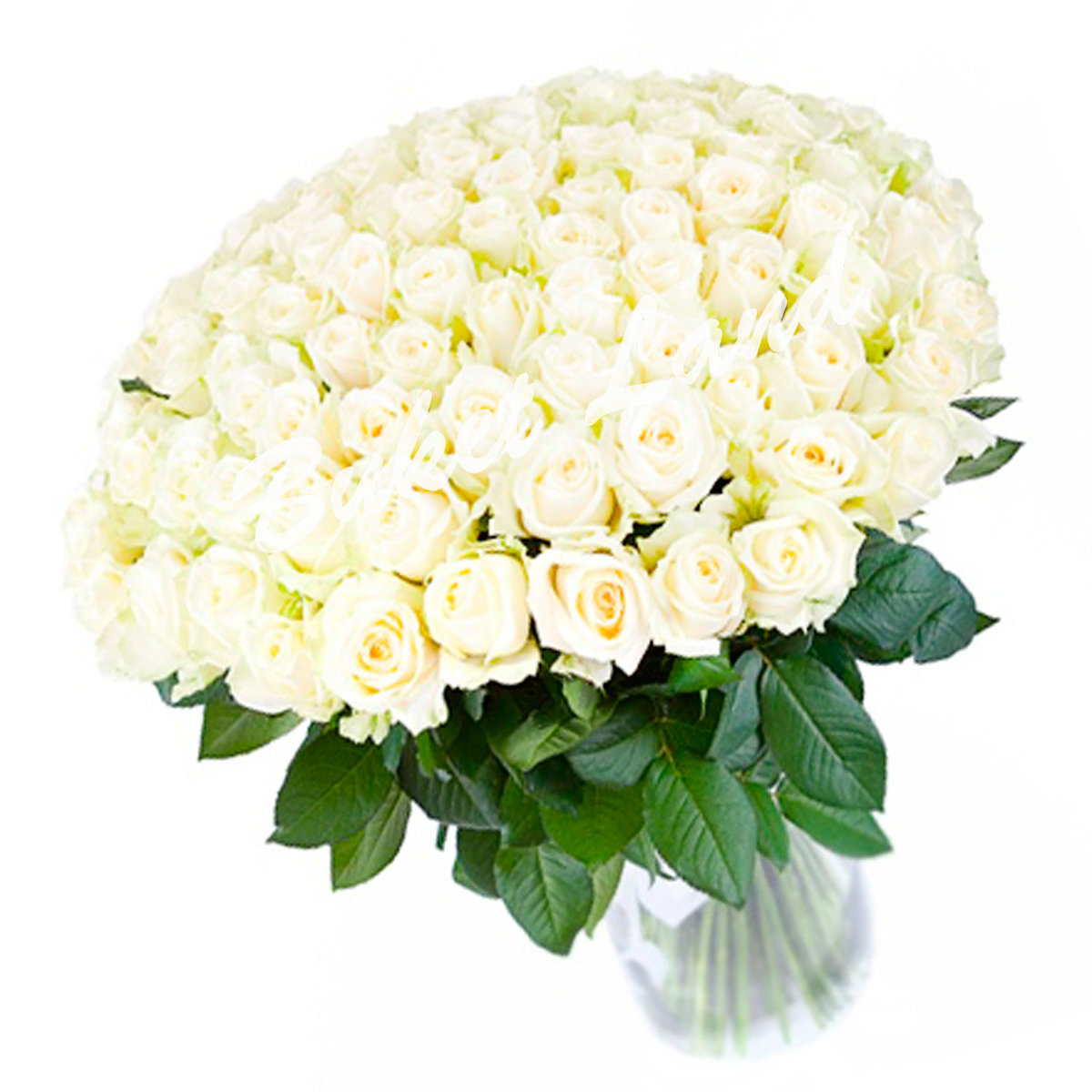 Картинки шикарный букет белых роз