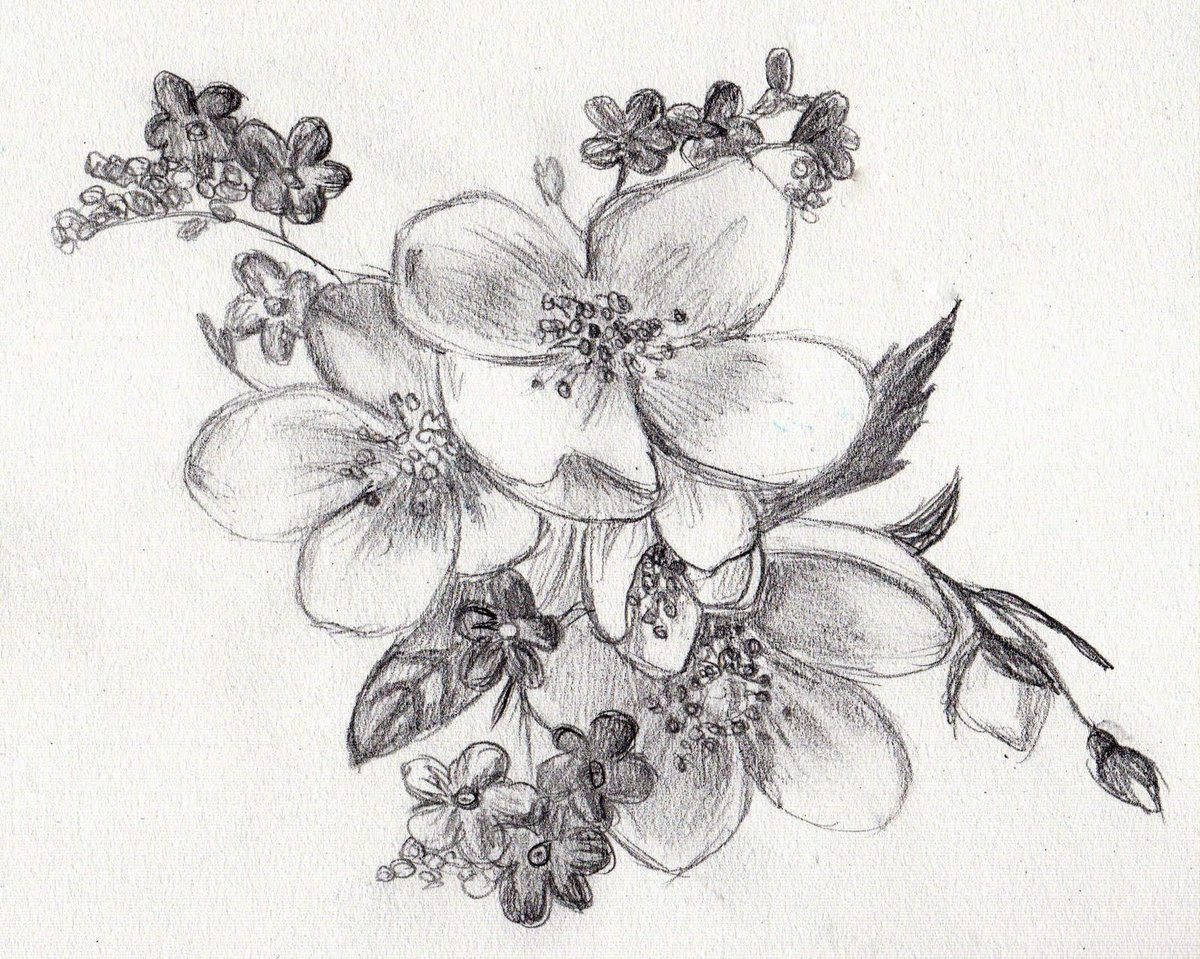 Красивые цветы рисунок карандашом