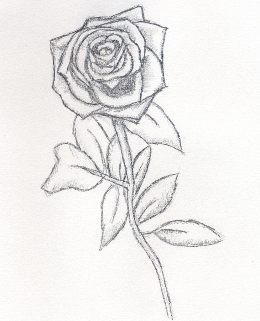 Срисовывать картинки легкие розы