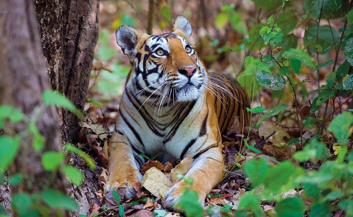 картинки индийских животных большие длинные