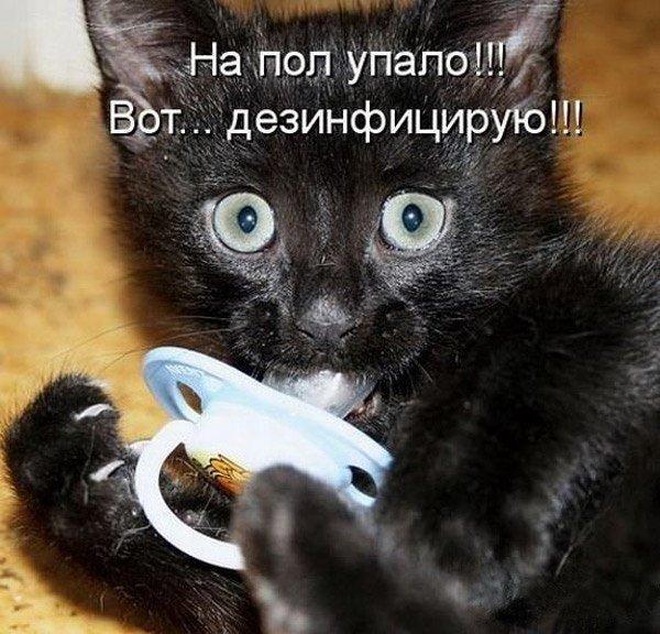 Смешные коты в картинках с надписями, фон