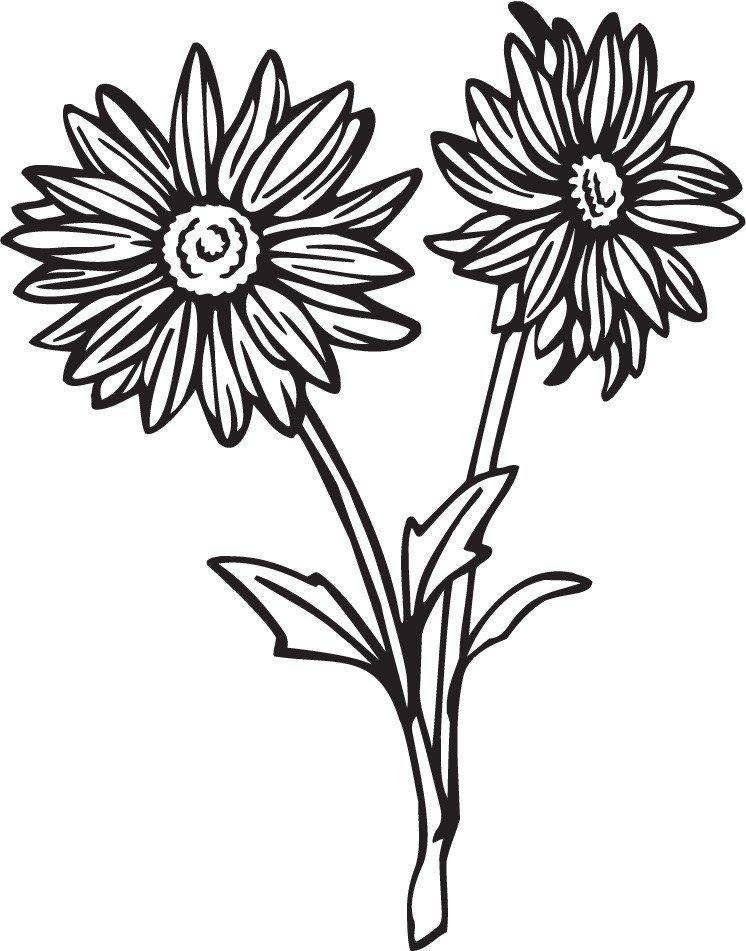 цветы герберы рисунки карандашом учебной деятельности