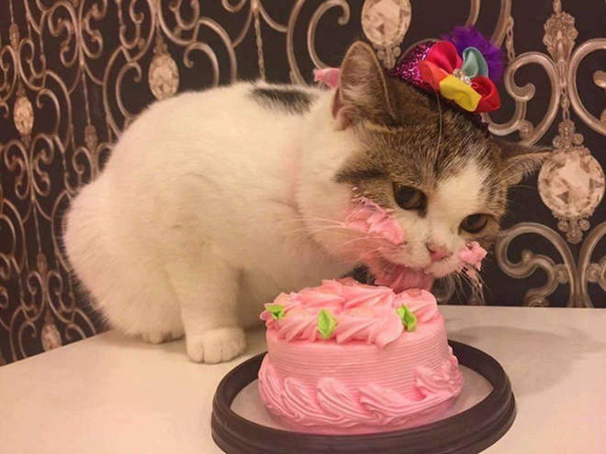 Картинки с днем рождения кота
