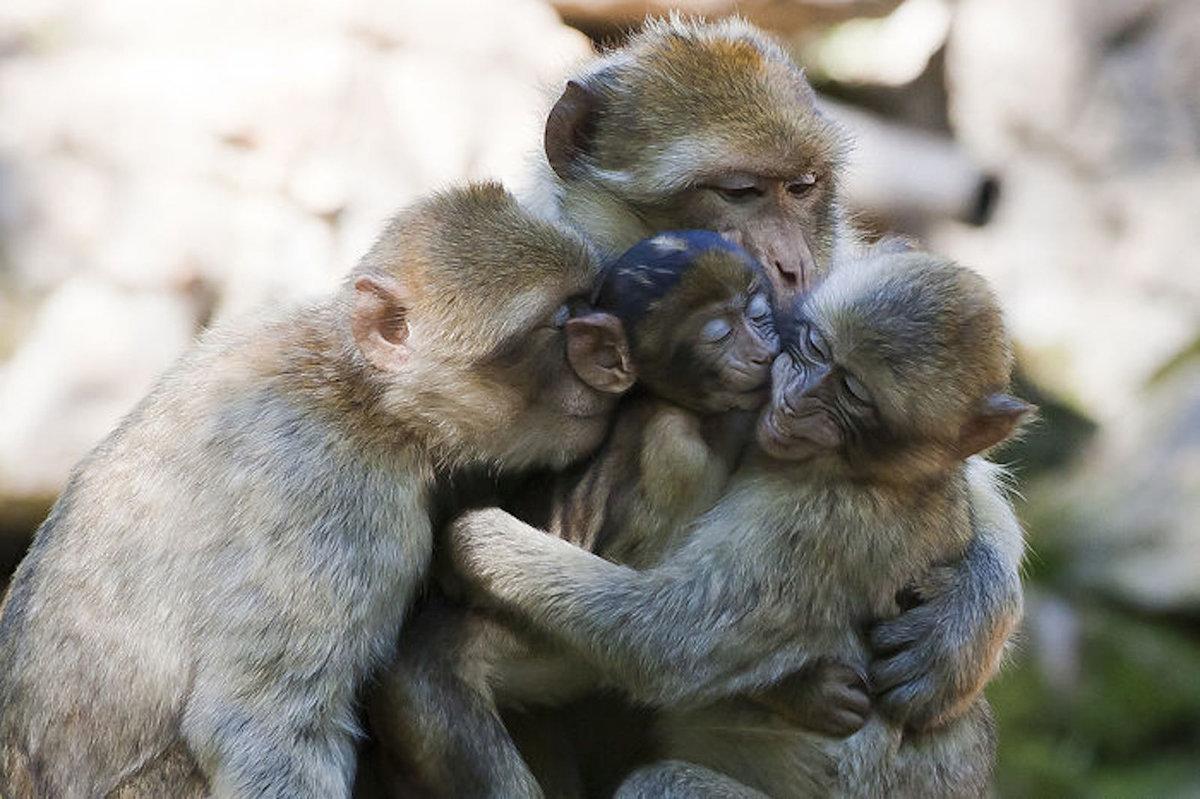 Открытка днем, картинка семья животные прикольные
