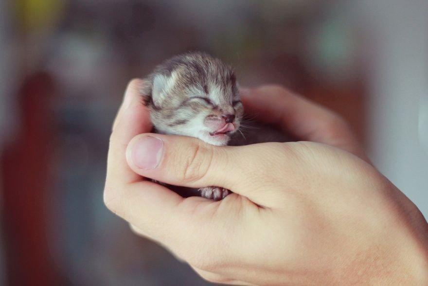 Малюсенький котенок ростом с мизинец фото — img 14