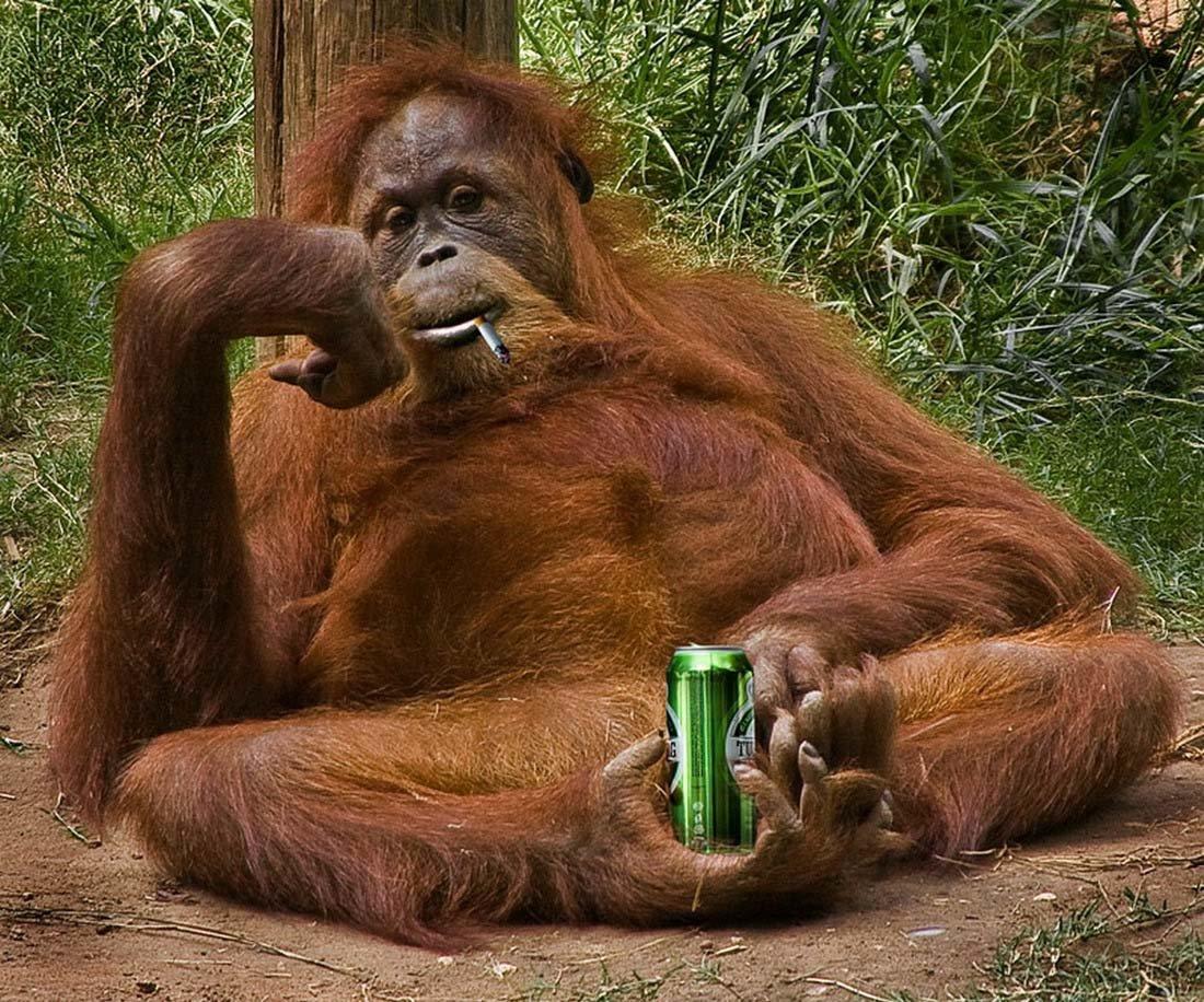 Прикольные картинка с обезьяной