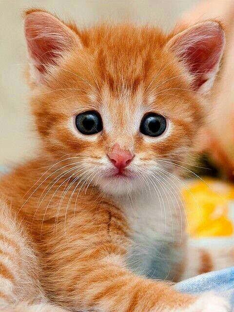 Картинка с надписью котеночек рожал
