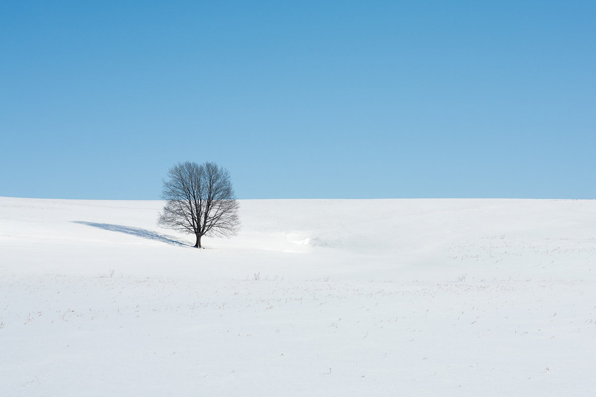 картинки поля в снегу детей это серьезное