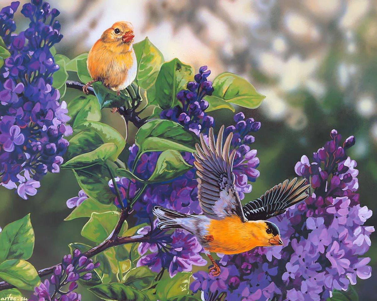 Днем рождения, картинки птиц в анимации