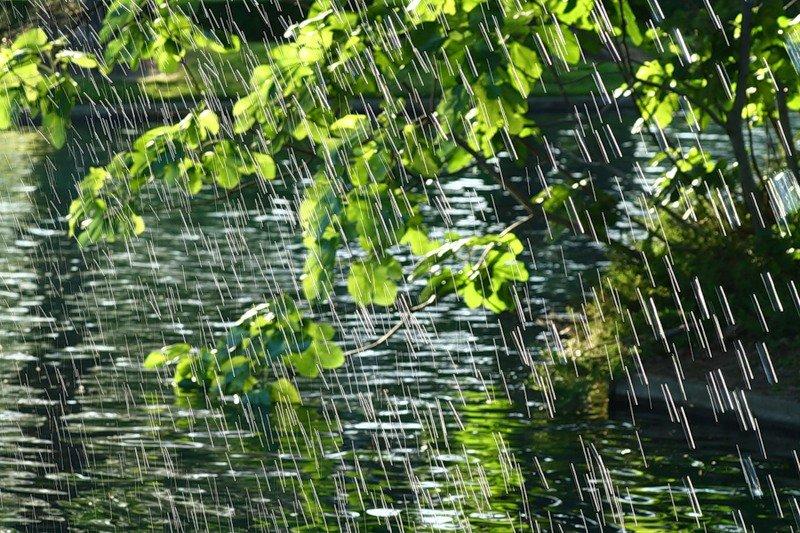 четырехзначный шифр, картинки идет дождь в лесу молодые секрет успевают