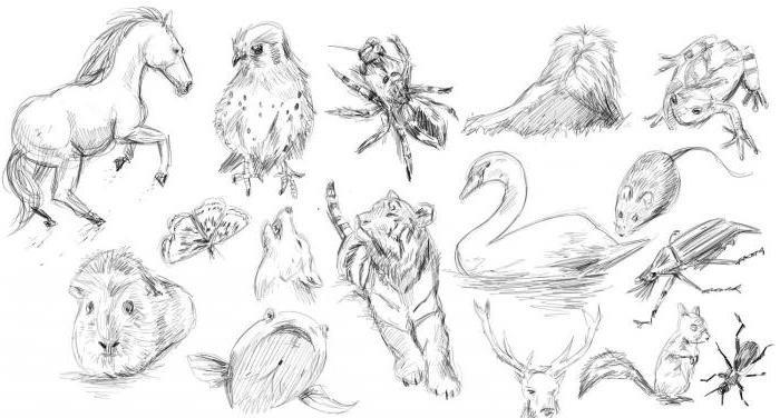 Зарисовки карандашом животных с картинками