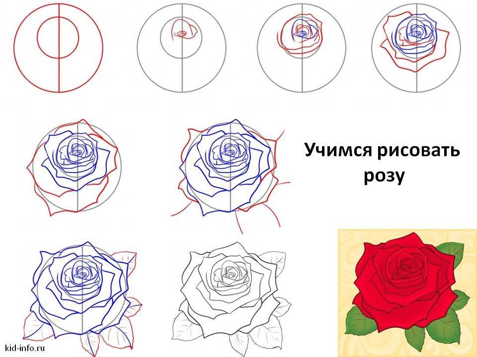 Картинка как нарисовать розу, картинки смотреть