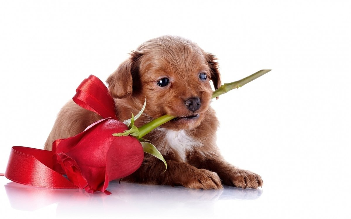 Надписью шаурма, открытка подарок для собаки