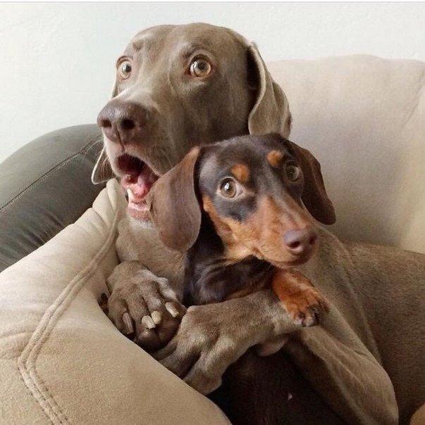 Смотреть смешные картинки до слез про собак