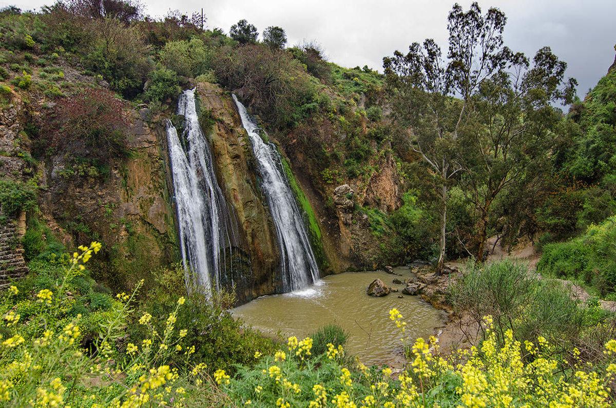 только природа израиля фотографии ёлки процесс