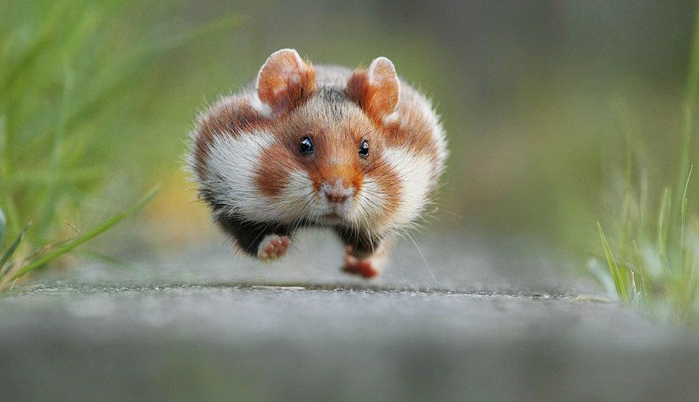 Смешные картинки тварини