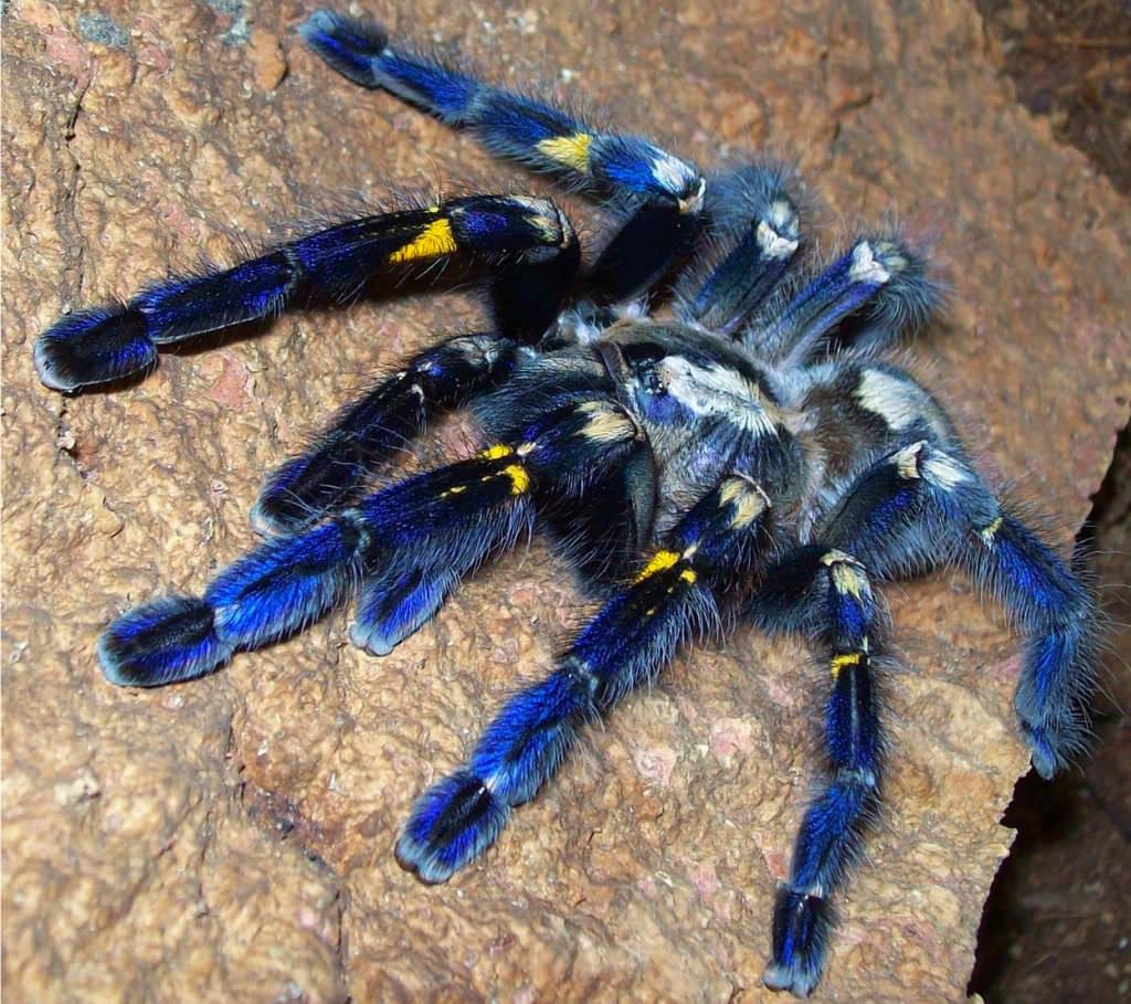 заключение картинки с пауками тарантулами болеет