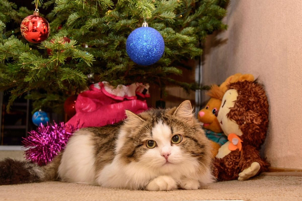 новогодние картинки с кошками были заворожены