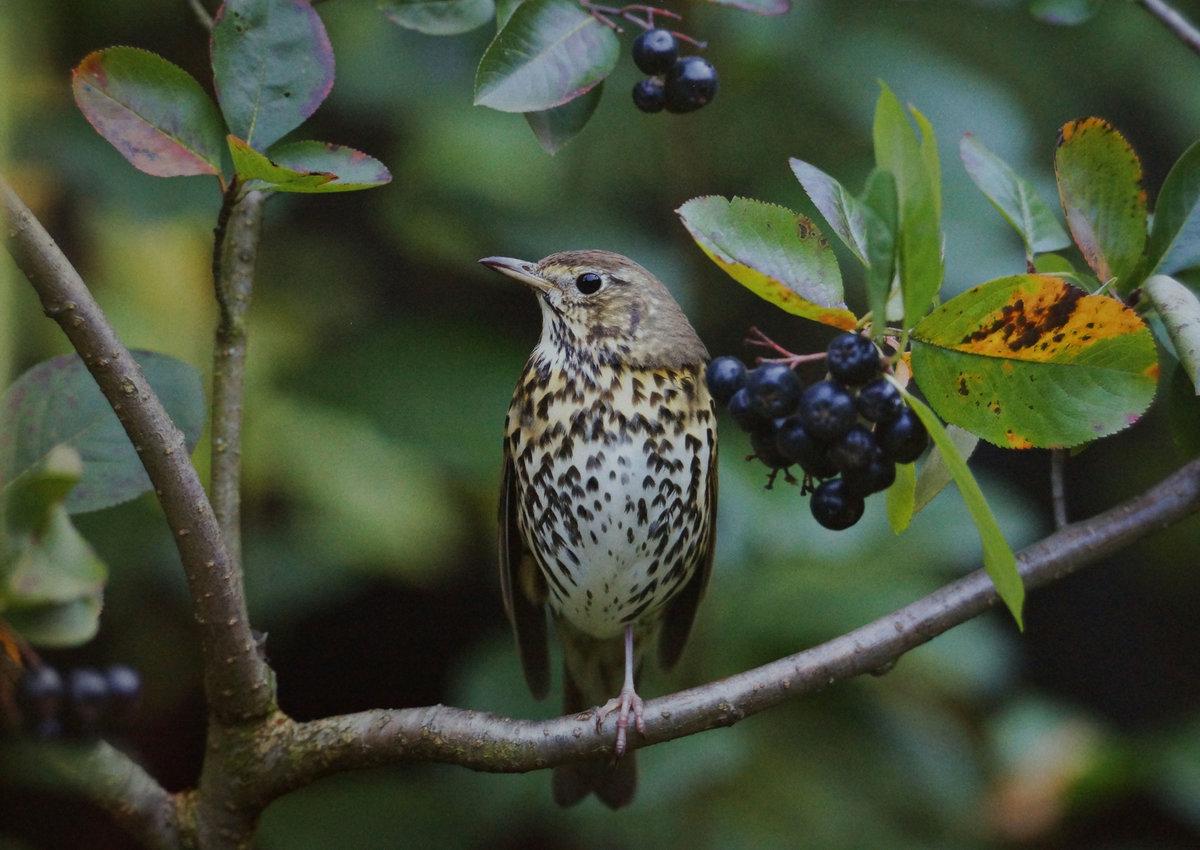 птицы летом картинки с названиями сначала сядем сами