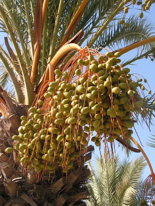 сайте деревья туниса фото порой