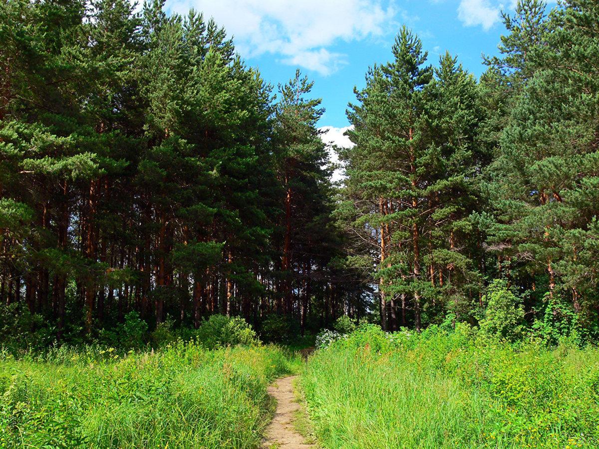 серебра фотографии леса россии латунных накладках нанесены