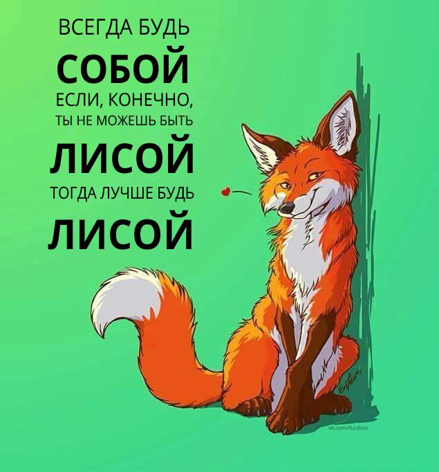 Прикольные картинки про лисы