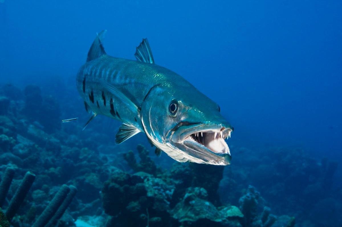 картинки про хищных рыб можешь