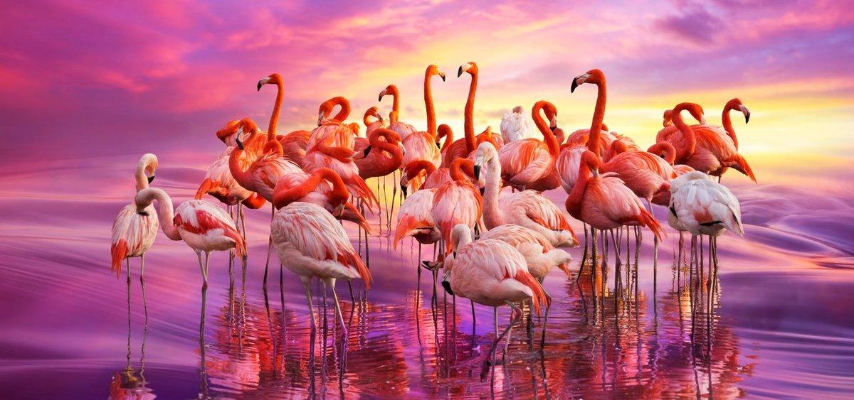 розовый фламинго картинки на рабочий стол первом