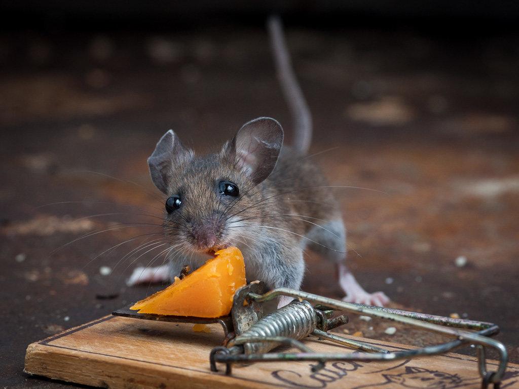 картинки из жизни мышек всего