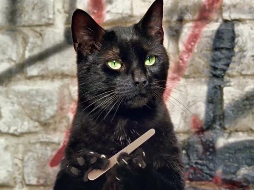 Картинки про черных кошек смешные, дню рождества