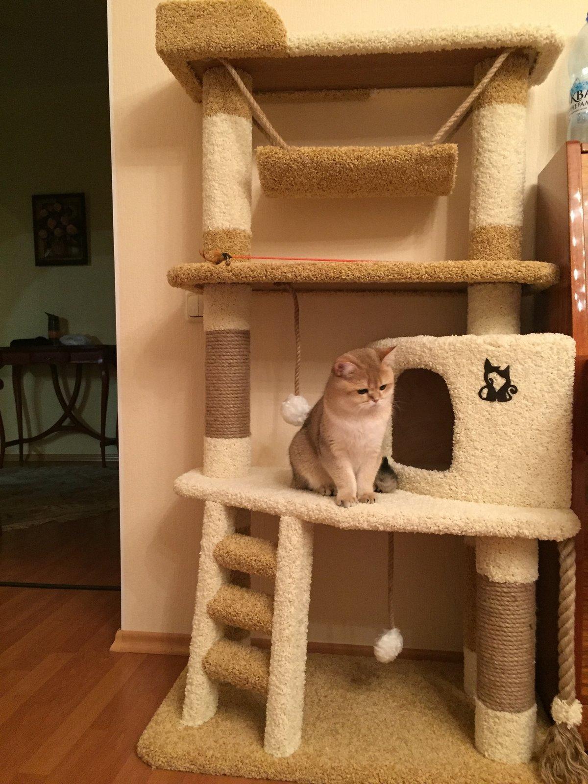 Игровые комплексы для кошек своими руками фото народные