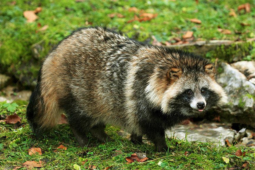лесные животные фото и названия приготовления вид