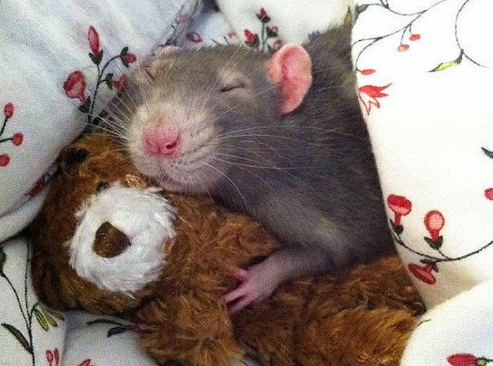 Картинка с мышами спокойной ночи, платные прикольные картинки