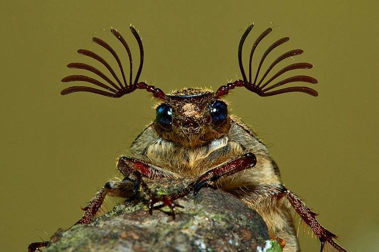 Днем, смешные картинки про жуков