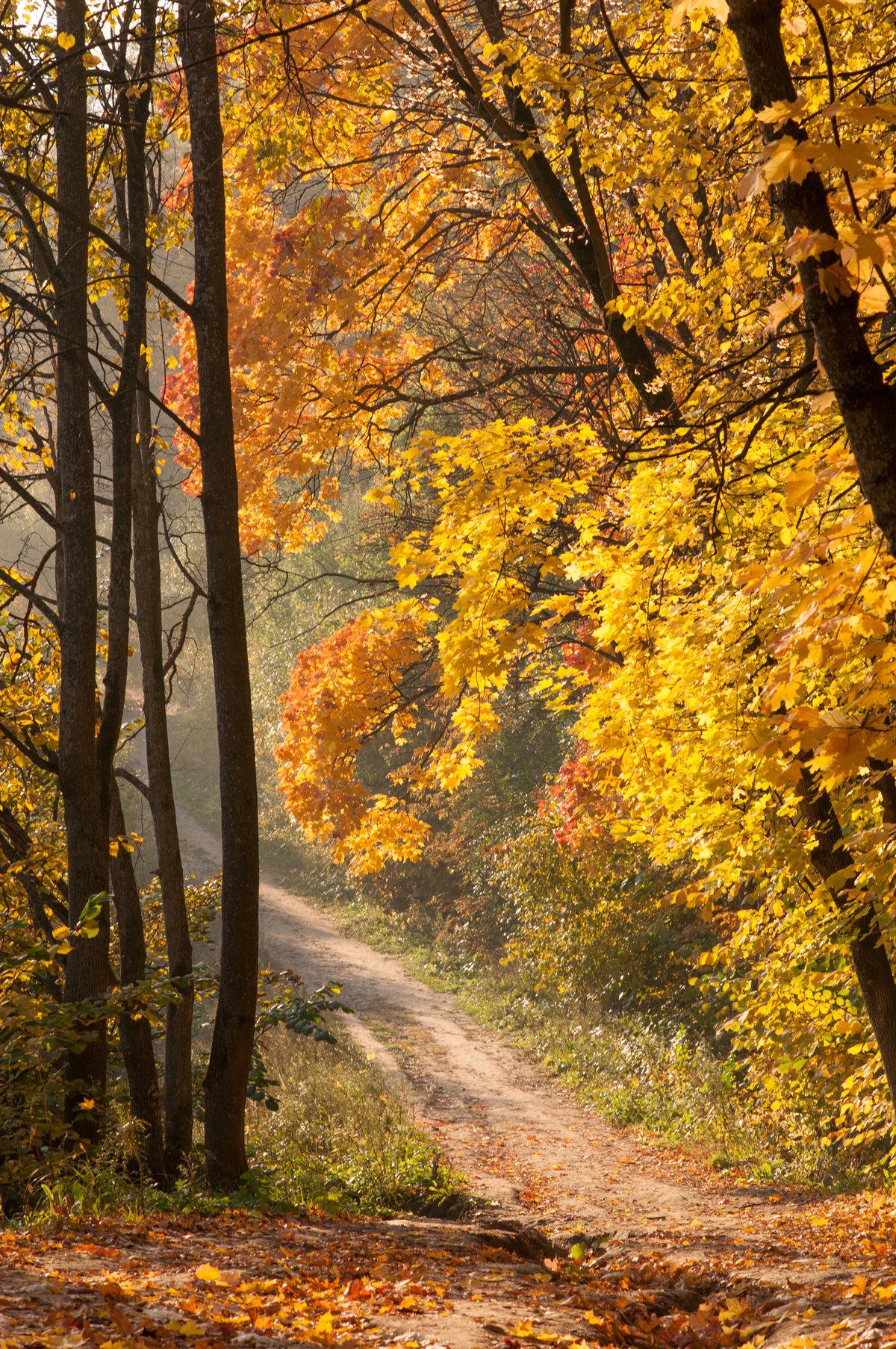 Осенний лес открытки
